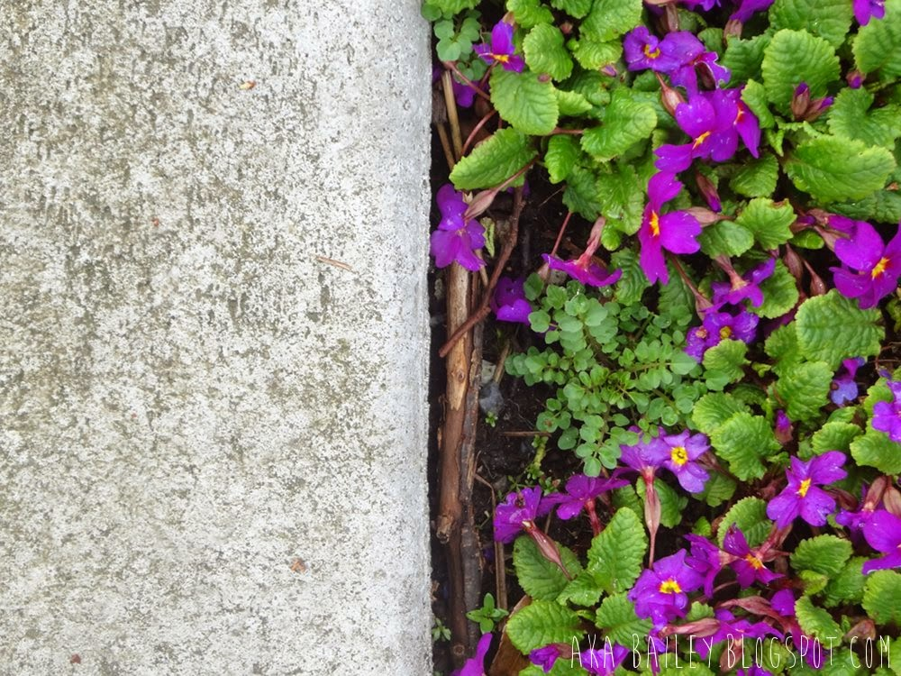 Purple flowers against a curb