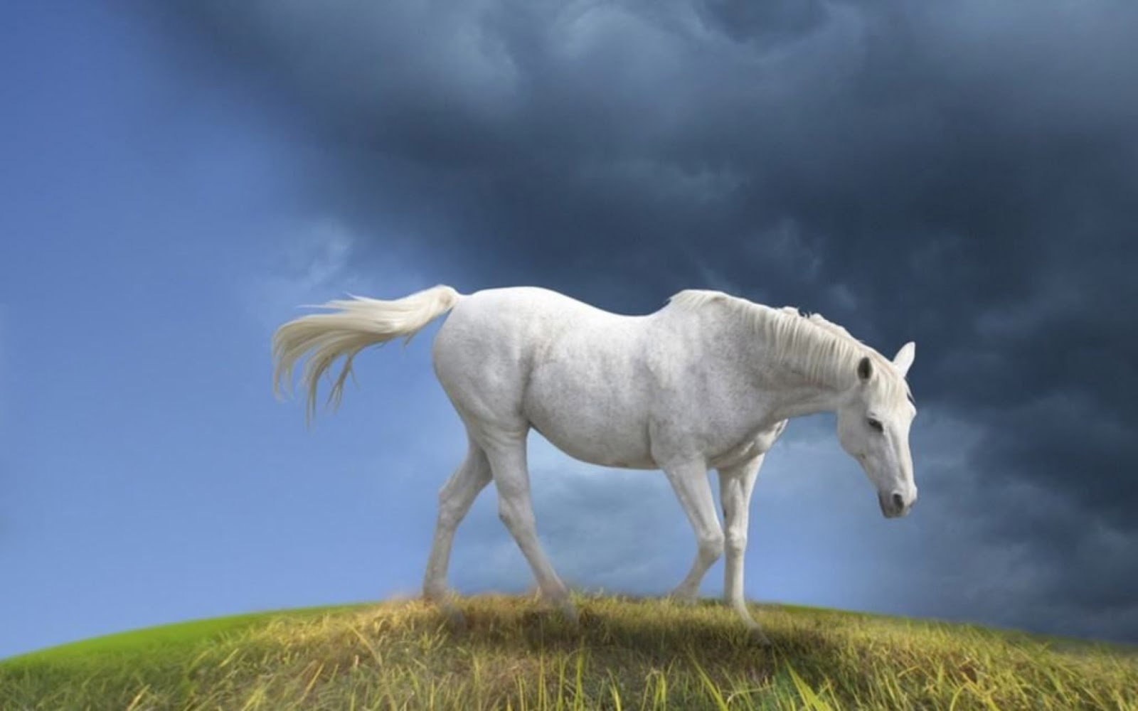 Best   Wallpaper Horse Family - horse+eating+grees+hd+wallpaper  Collection_913081.jpg