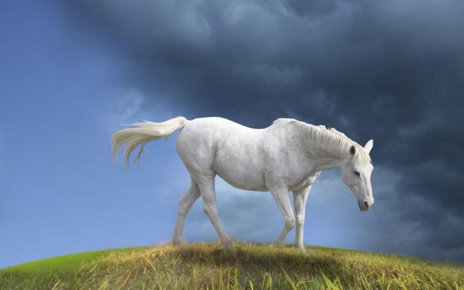 Great   Wallpaper Horse Creative - horse+eating+grees+hd+wallpaper  Photograph_672210.jpg