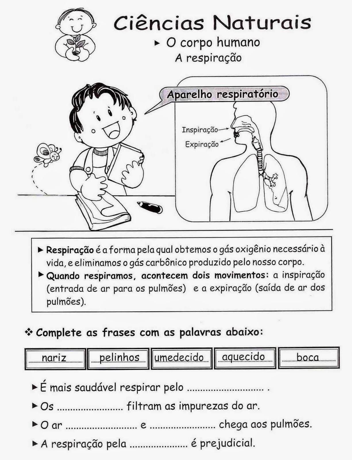 Atividades de ciências 5 ano sistema respiratório