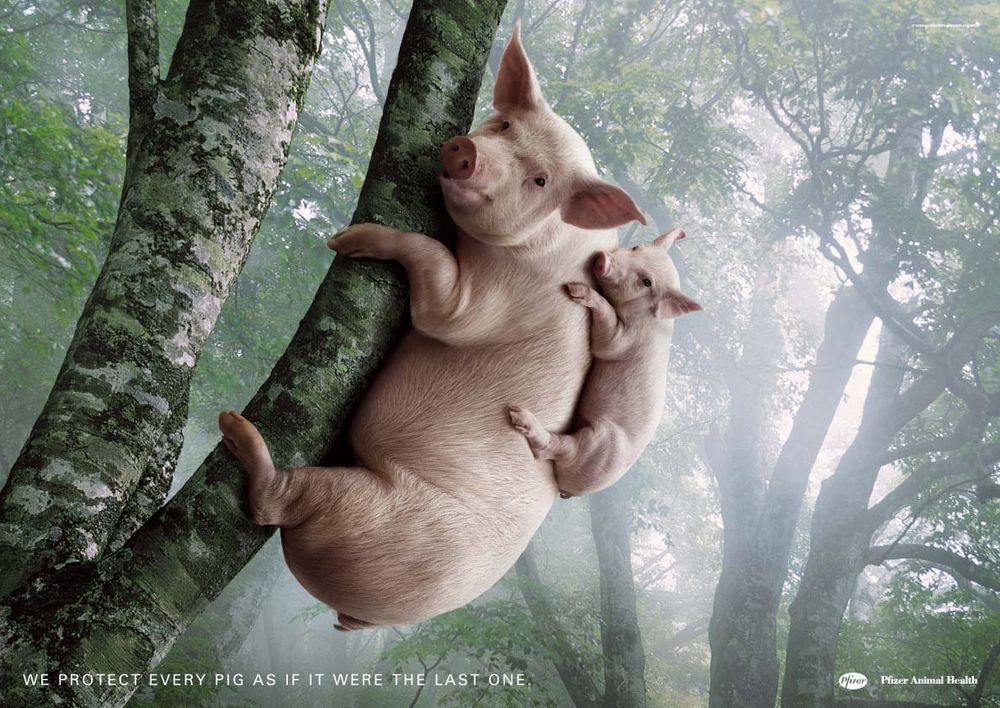Funny+animals+ads+-++pfizer+animal+health+%2528pig%2529.jpg