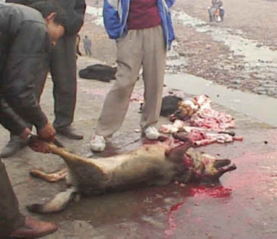 Picture of Dead Animal Killed Murdered Dog