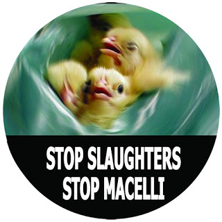 STOP MACELLI STOP SLAUGHTERS. Campagna Attacca l'Adesivo2