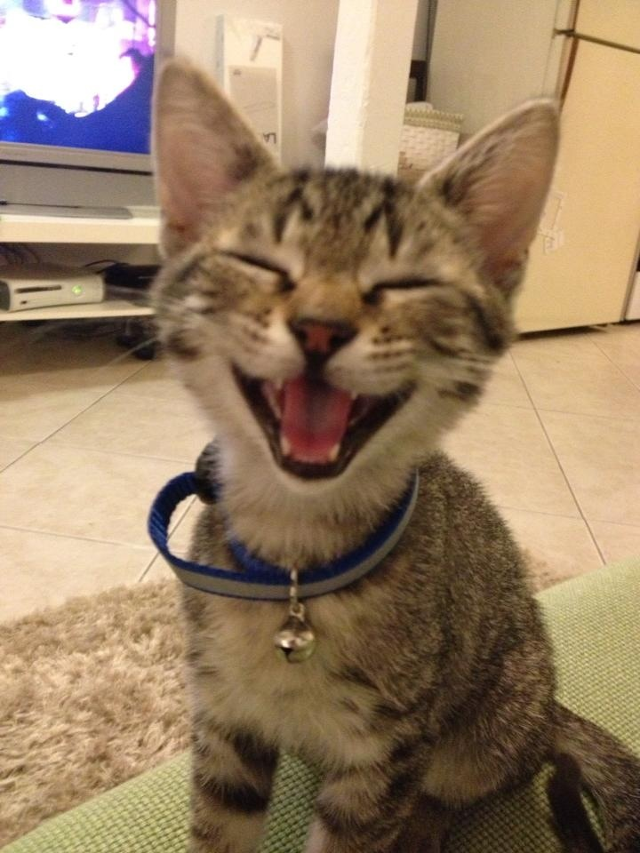 Funny cats - part 45, cat pictures, funny cat pictures, cat photos, funny pictures