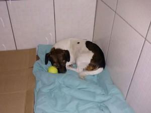 'Serena' tem cama e brinquedo em lar temporário (Foto: Arquivo pessoal/ Fernando Negrini)