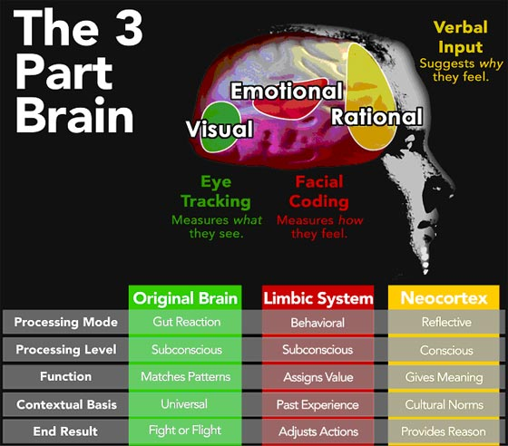 Brain Function Chart4