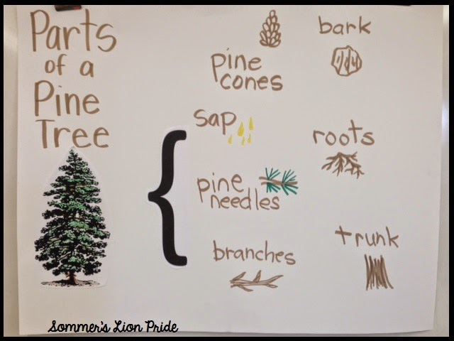 trees trees and trees u003c can t find substitution for tag blog rh sommerslionpride com Pine Tree Drawings Pine Tree Diagram Labeled