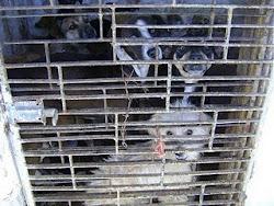 Castre o seu animal e seja responsável. A realidade do abandono é cruel.