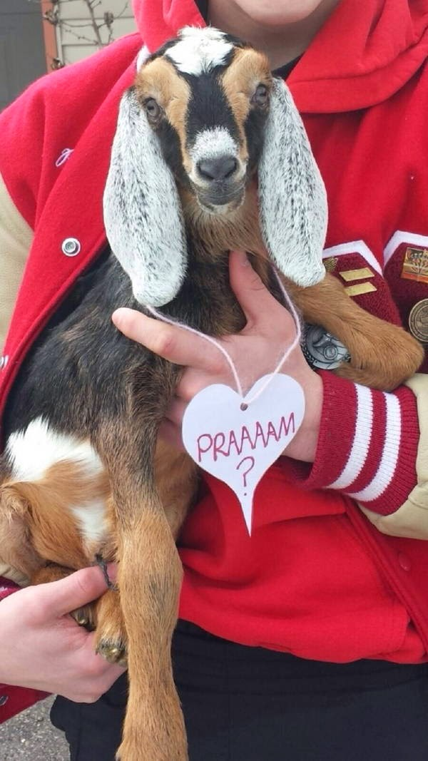 Funny animals of the week - 21 March 2014 (40 pics), funny animal pictures, goat