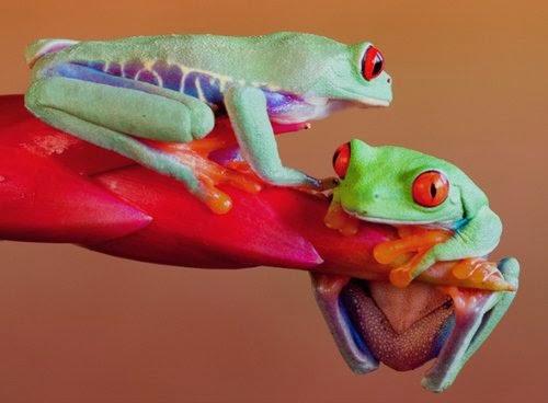 12-Wil-Mijer-Frog-Macro-Photography-www-designstack-co
