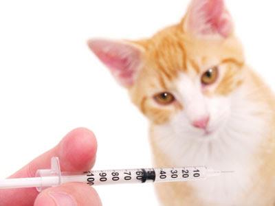 Berapa Kali Kucing Harus Divaksin Selama Hidupnya?