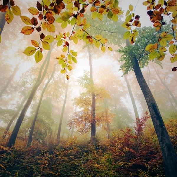 Hình ảnh rừng đẹp