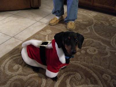 Perros+vestidos+para+Navidad Imagenes chistosas de perros navideño