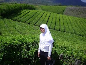 Panorama Kebun Teh, Malino Makassar