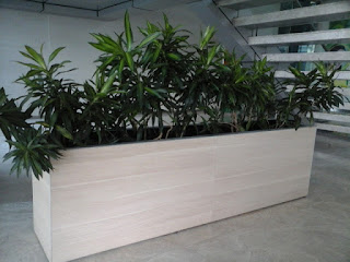 planter box tanaman hias song of jamaica
