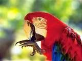 Parrot | Parrot Tips