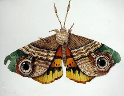 民族衣装をまとう蝶
