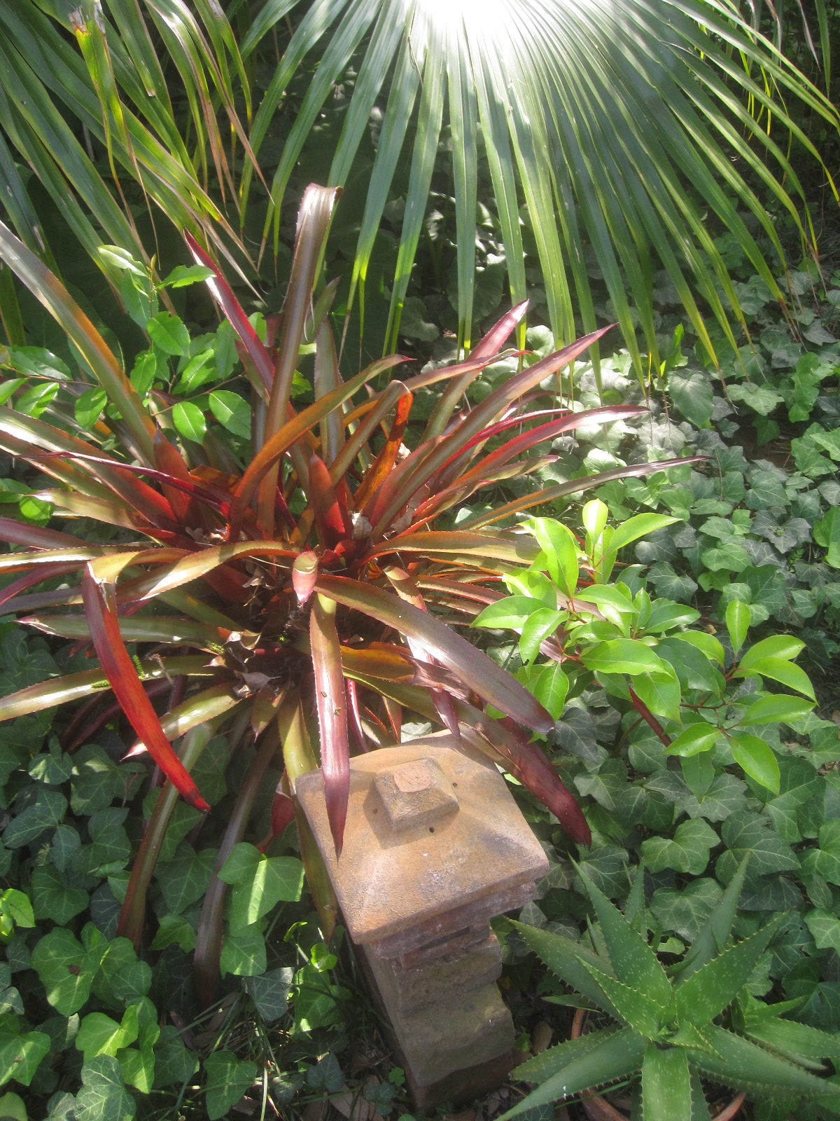 tropical texana gardening