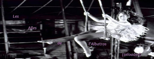Albatros Reloaded