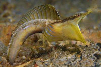 eel-mouth_underwater