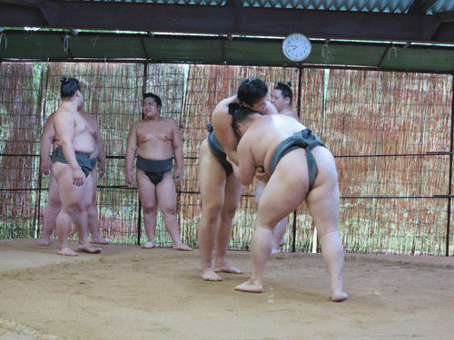 Sumo wrestlers Nagoya