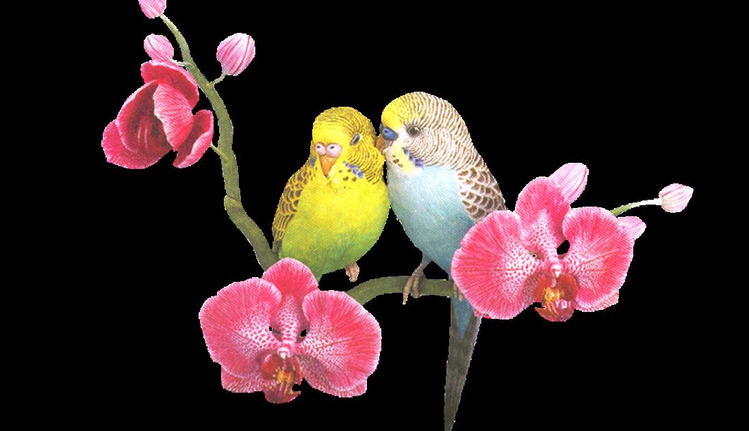 Фон с птицами