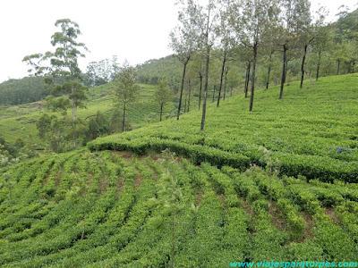Escapadas en la India (VI). Kerala, 1º parte.