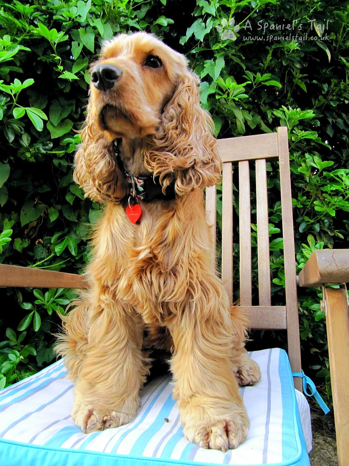 A Spaniels Tail Scrufts product review