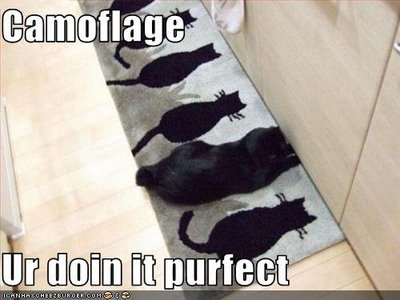 funny animals camouflage