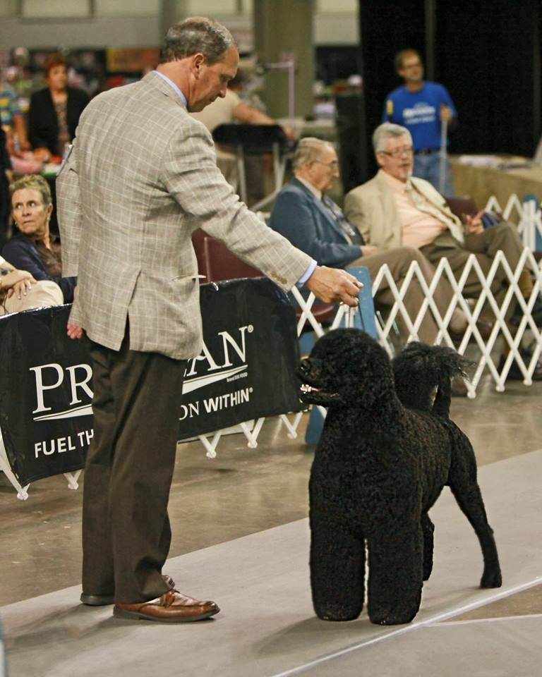 Moore County Kennel Club Dog Show