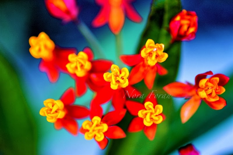 Colorful and Bold Flower Photography 2