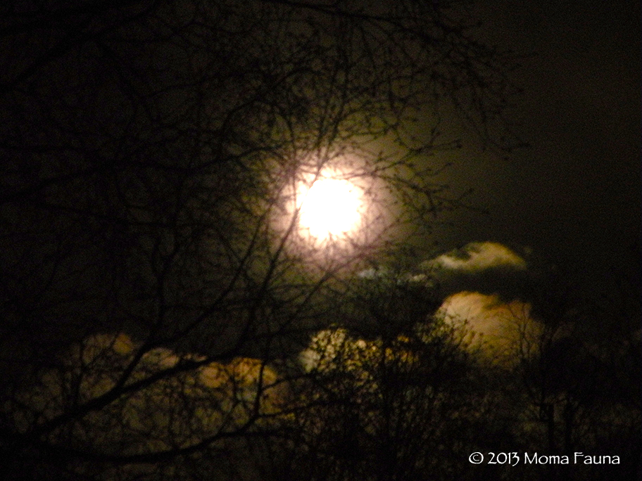 February Moonscape, Dreamscape, Gift.