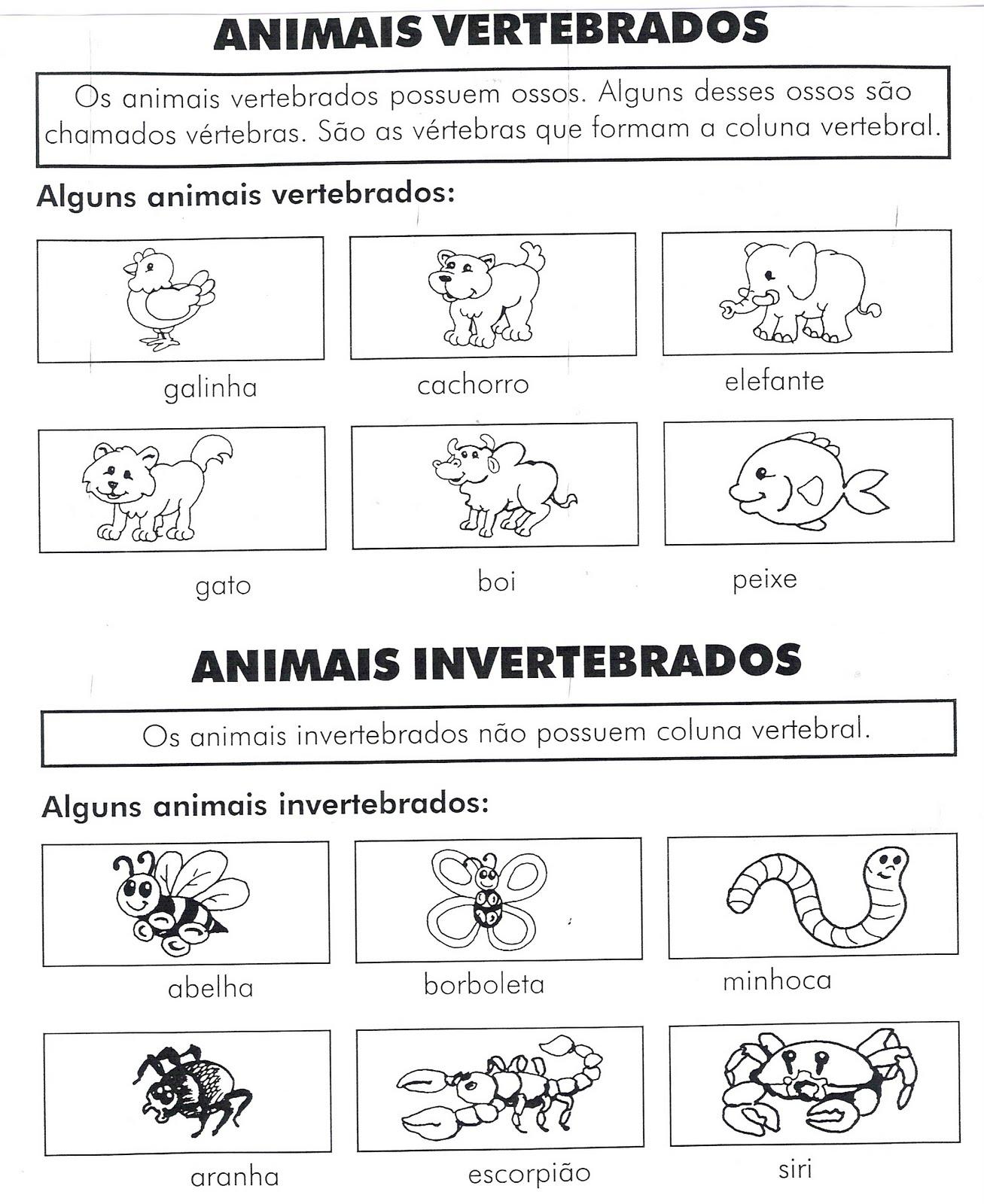 ANIMAIS VERTEBRADOS E INVERTEBRADOS EXERC  CIOS ATIVIDADES PARA