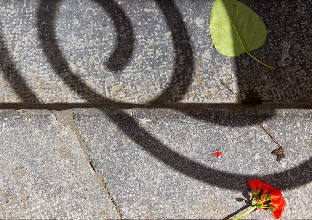 geranium and green leaf on the sidewalk