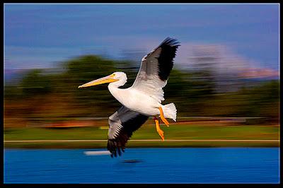 foto panning burung