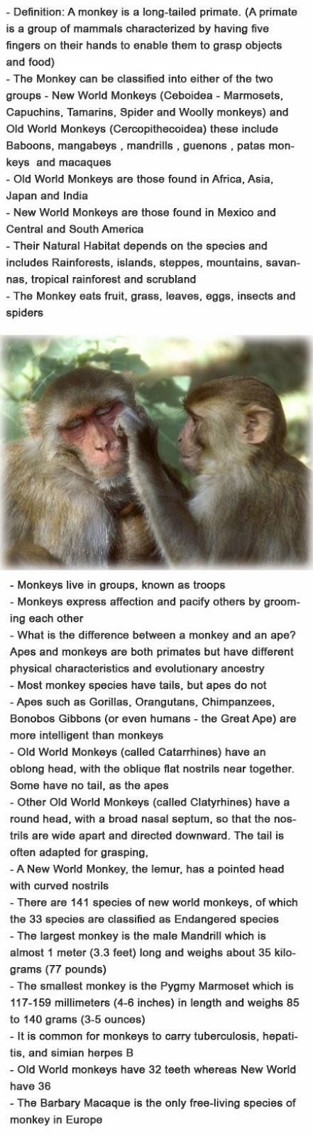Facts on monkeys