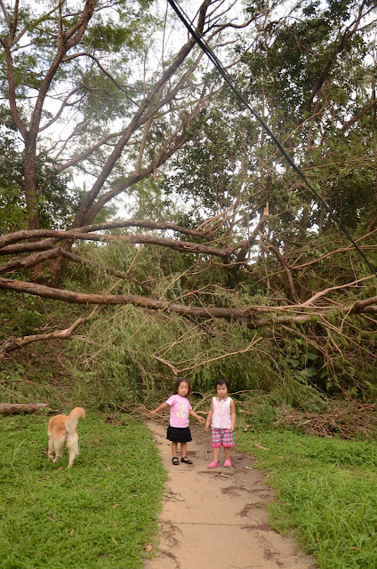 kids and fallen tree at the staircase