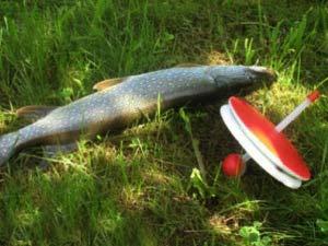 Рыбалка на кружок