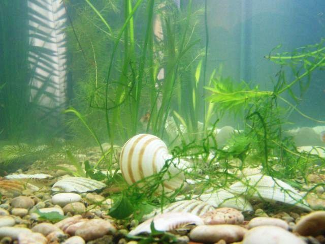 Как сделать чтобы вода в аквариуме было чистой