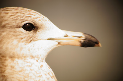 bird free image