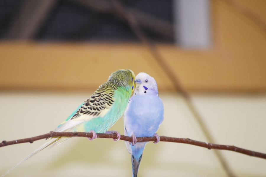 Love Birds Wallpaper For Mobile : 40 Beautiful love birds wallpapers Inspire Information