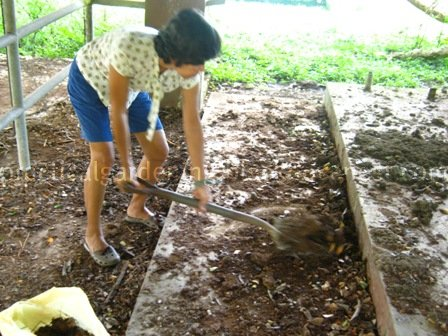 lumber from carabao manure Research: horse manure paper download  the most well-known is the wood fiber in the beginning of papermaking mostly fibers from cotton and silk were used a.
