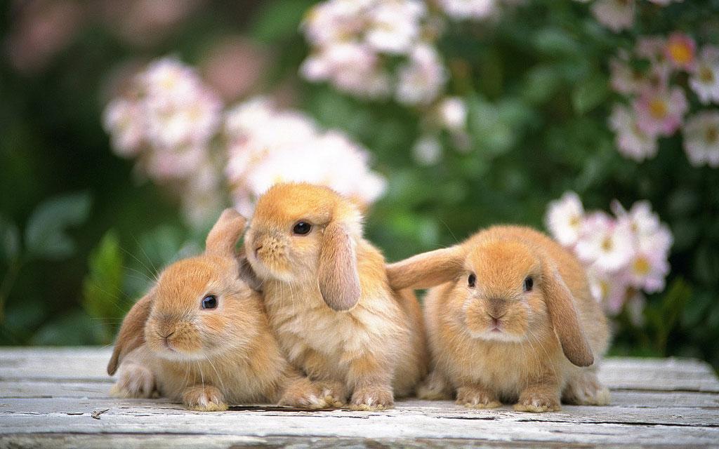 Imagenes conejos bebés - Imagui