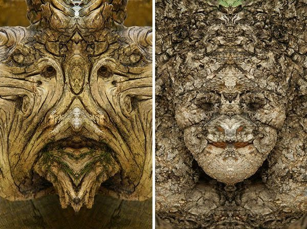 The faces of the trees