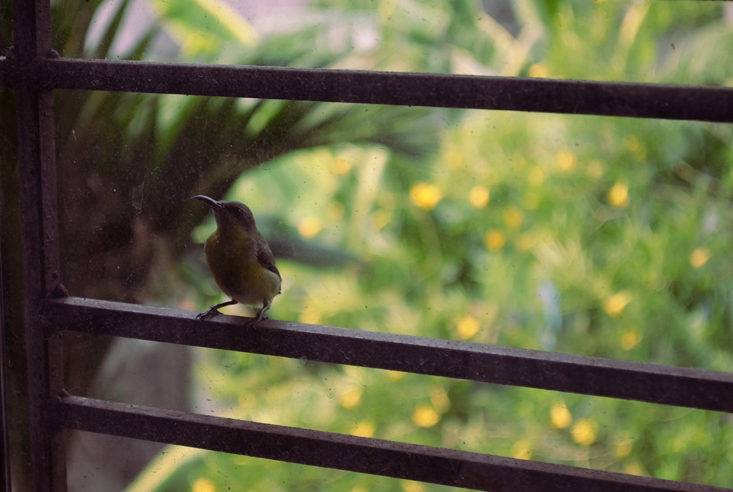 bird on my window bars