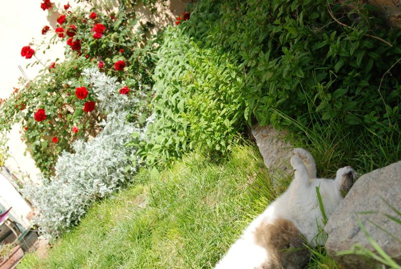 gatto che dorme giardino di maggio