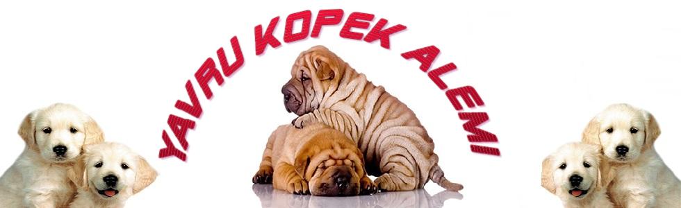 Yavru Köpek Alemi