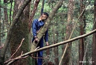 Mayat Bunuh Diri Di Hutan Aokigahara
