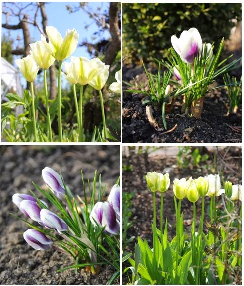 Vår i min trädgård