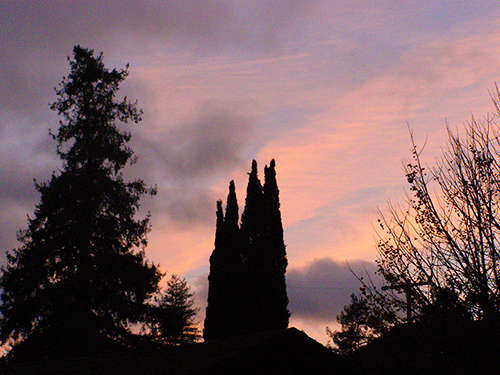 Tree silhouettes with glowing grey and orange skies